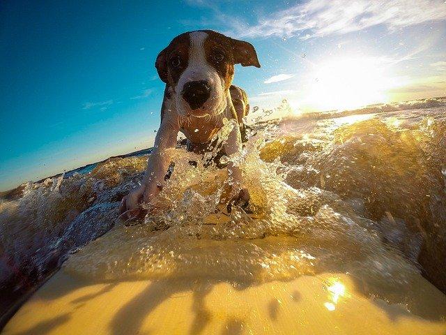 一人で出来る大人の趣味【サーフィンの始め方】